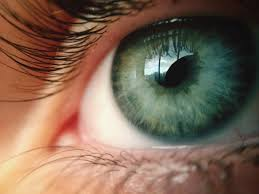 Blind Spot In Left Eye Why Do You Have A Blind Spot