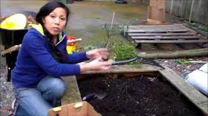 planting potatoes in the winter for spring vegetable garden youtube