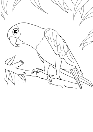 parrot colouring activities kidspot