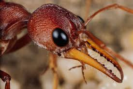 queen ants bees and termites bury their dead u2014here u0027s why