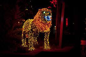 denver zoo lights hours features light decor denver zoo lights hours 2014 astounding