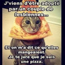 Meme Chat - pauvre chat meme by pequenot memedroid