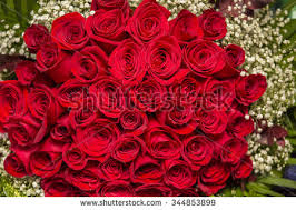 Red Rose Bouquet Natural Red Roses Background Border Red Stock Photo 344853899