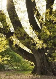 morris arboretum of the of pennsylvania explore