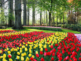 Spring Flower Pictures The World U0027s Top 5 Destinations For Spring Flowers Booking Com