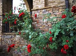 the graceful gardener william shakespeare 2000 rose