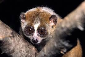 sugar gliders are adorable but they don u0027t belong in your pocket