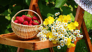 flowers and fruits flowers and fruits wallpapers impremedia net