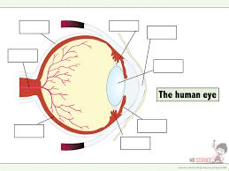 gcse biology classification ppt u0026 worksheets by jam2015
