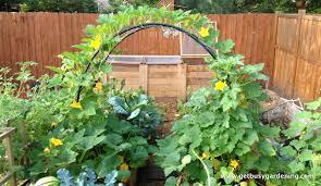 Urban Veggie Garden - garden ideas urban vegetable garden design with wooden pattern