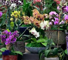 orchid arrangements orchid arrangements the los angeles flower market