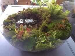 best 25 small terrarium ideas on pinterest indoor mini garden