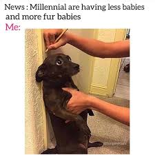 Memes That Will Make You Laugh - 18 animal memes that will make you laugh cutesypooh