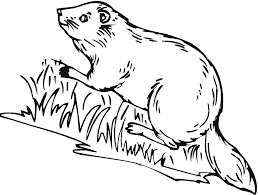 free beaver coloring pages