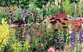 All Year Flowering Shrubs - enjoy cut flowers from the garden all year round telegraph