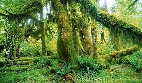 biodiversity forest large biological sciences
