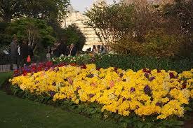 flower garden picture of st james u0027s park london tripadvisor