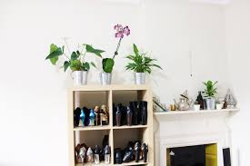 fresh indoor plants decoration ideas for interior home flower
