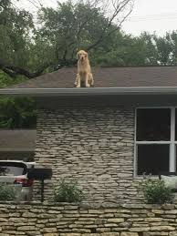 Dog On A Roof I Just Saw The Bravest Most Glorious Pupper Of All Time Perched