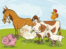 funny farm animals royalty free cliparts vectors and stock