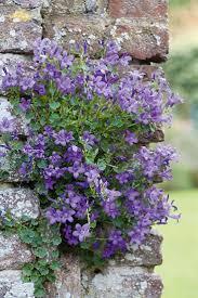 84 best garden images on pinterest chelsea flower show bronze