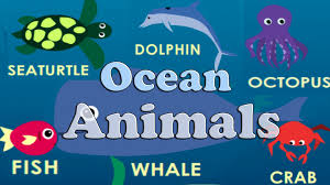 learn animals of the ocean flashcards find count youtube