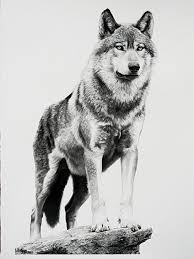 alpha by william harrison wolff carbon pencil 41 x 29 5
