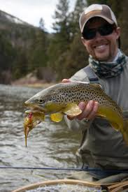 smith backdrop brown trout montana
