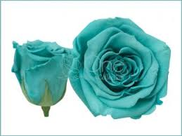 teal roses preserved roses everlasting roses forever roses vibrant colors
