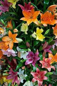 296 best flowers images on pinterest flowers bloemen and