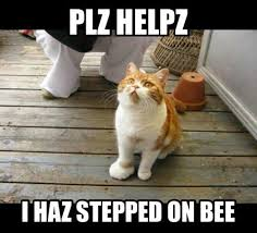 Funny Memes About Cats - 15 hilarious memes that cat lovers everywhere will appreciate