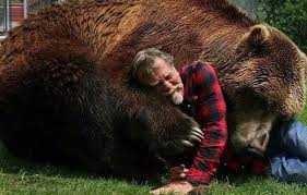 Ozzy The Grizzly Bear Picks The Eagles To Win The Super Bowl Local - bart the bear and his trainer doug seus bears animal and creatures