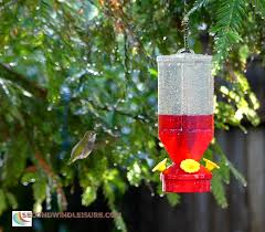 resilient hummingbirds backyard birdwatching second wind