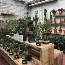 succulent house our cactus u0026 succulent house urban plant life garden centre cork