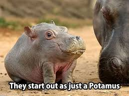 Cute Baby Animal Memes - the 20 funniest animal memes