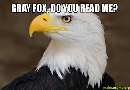 Meme Fox - gray fox do you read me make a meme