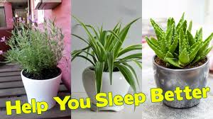 the 10 best plants to have in your bedroom to help you sleep