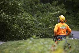 tree service tree removal tree pruning mayer tree service company