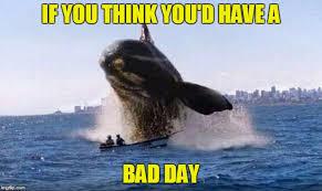 Whale Meme - whale imgflip