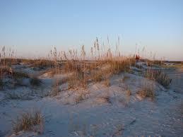 wild dunes