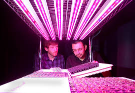 plant seedlings grown with led lights at purdue