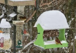 winter wonderland gail birdtale
