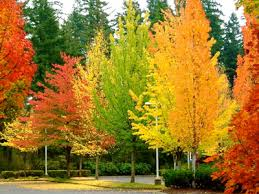 albero giardino prodotti ilpiantonaio it