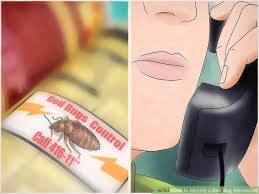 I Found A Bed Bug Now What How To Identify A Bed Bug Infestation With Pictures Wikihow