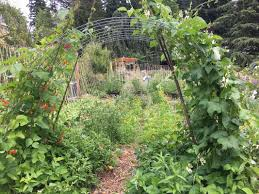 songaia community the garden blog