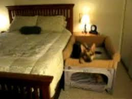 Doggie Bunk Beds Co Sleeper Pet Bunk Bed