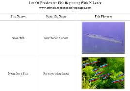 freshwater fish names starting with n animals name a to z