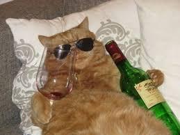 Drunk Cat Meme - drunk cat cats know your meme
