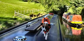 thames river boats dogs dog pet friendly boating holidays on the uk canals and norfolk broads