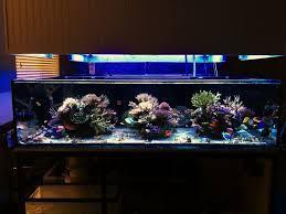 Floating Aquascape Reef2reef Saltwater And Reef Aquarium Forum - 32 best reef aquascapes images on pinterest aquarium ideas